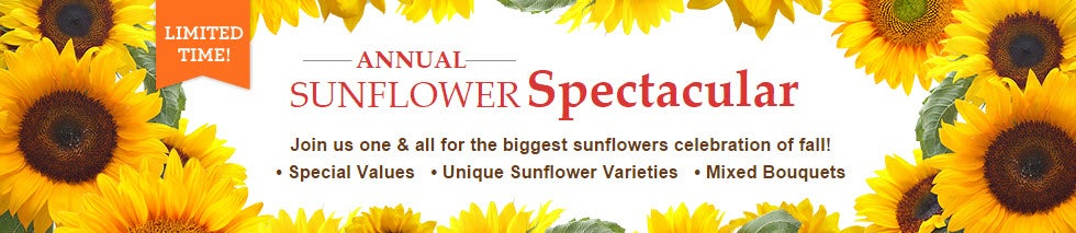 Annual Sunflower Spectacular | 1-800-Flowers.com