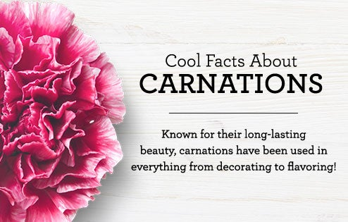 Cool Facts About Carnations