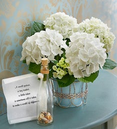 Sea Breeze Hydrangea