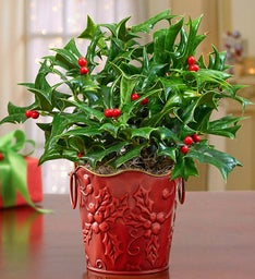 Vintage Holly Plant + Free Candle