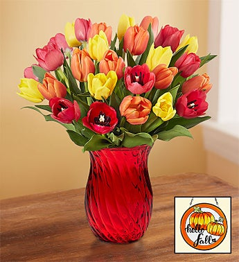 Assorted Fall Tulips 30 Stems with Red Vase
