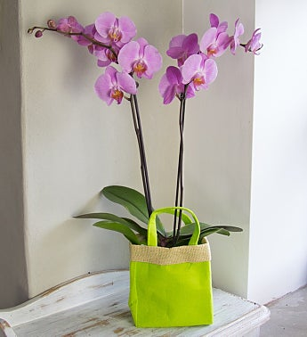 Pink Orchid Gift Bag Bouquet