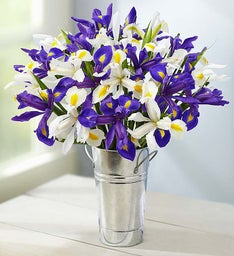 Purple & White Iris Mix