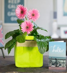 Gerbera Gift Bag Bouquet