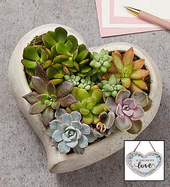 Sweet Succulent Heart Garden (Large with Plaque)