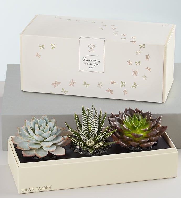 In Loving Memory Succulents by Lula's Garden