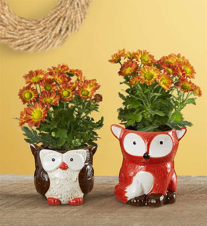 Fall Forest Friends Mini Plants
