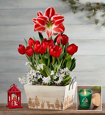 Holiday Charm Bulb Garden + Free Candle