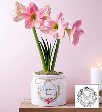 Happiness Blooms Pink Amaryllis + Free Suncatcher