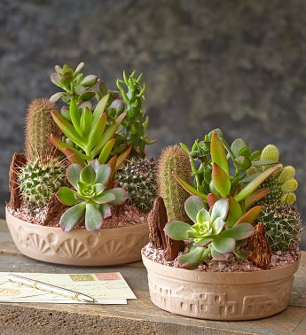cactus dish garden from 1 800 flowers com