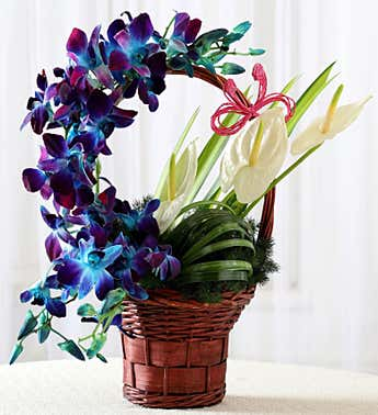 Orchid & Anthurium Basket Arrangement