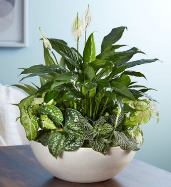 What Are The Best Plant Food For Nephthytis
